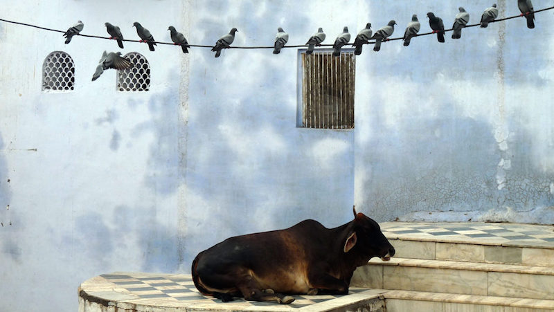 Pushkar ©Sophie Squillace