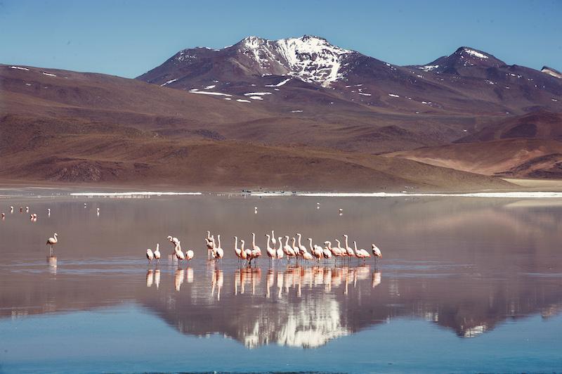 Au pays des flamants et des lamas