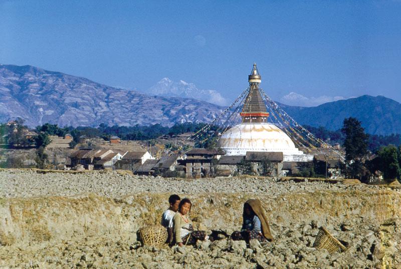 Népal, le tigre de Katmandou