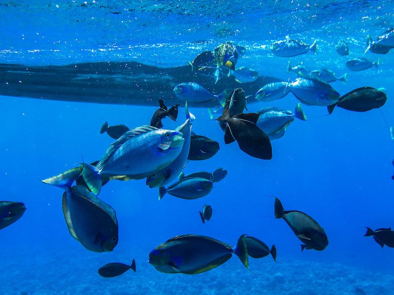 La plongée responsable et durable