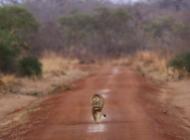 Bénin, un vent nouveau souffle sur le Parc National de la Pendjari ©Jonas Van de Voorde