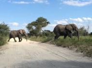 Éléphants Botswana