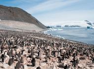 Greenpeace veut créer une immense réserve sous-marine en Antarctique