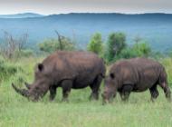Afrique du Sud, sur la piste du rhinocéros ©ChirstopheMigeon