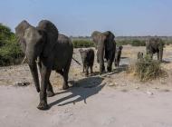 Desert et safaris - tourisme humain et écologique