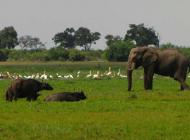 Botswana une gestion touristique vertueuse garante d'une biodiversité préservée