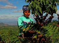 Agriculteurs Rainforest