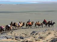 Chameaux sur la route du sel en Mongolie