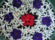 Sri Lanka fleurs