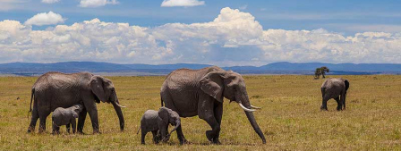 Éléphants du Kenya