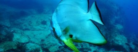 Seychelles_poisson