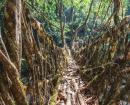 Inde, parenthèse enchantée au Meghalaya
