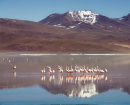 Bolivie flamants roses