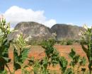 cuba_agro_ecologie_vallee_vinales