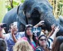 """Des touristes fiers de se montrer à leurs amis en compagnie d'un éléphant """"bête de foire"""" et maltraité"""