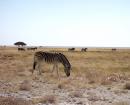 Namibie safari zèbre