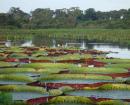 ecotourisme pantanal