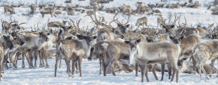 Canada rennes