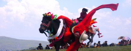 Tibet cavalier