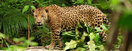 Biosphere Expeditions : un engagement sans faille pour la Nature