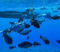 Plongée durable poissons