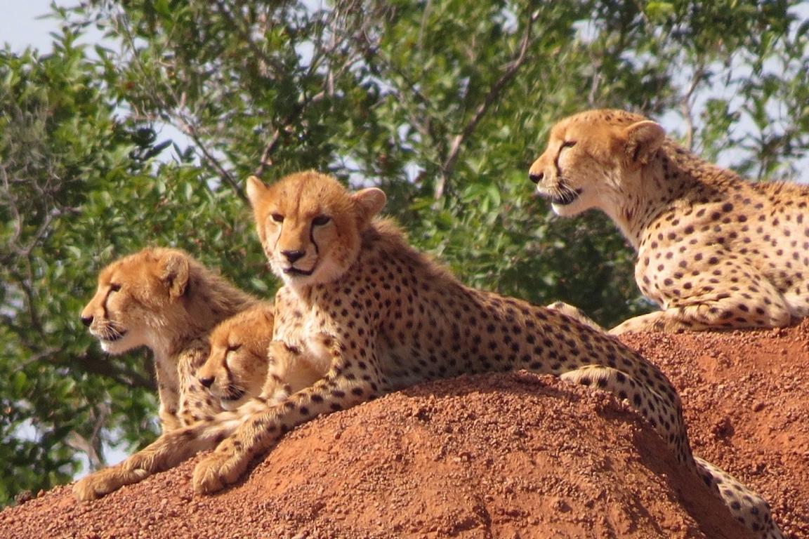 Bénin parc national de la Pendjari