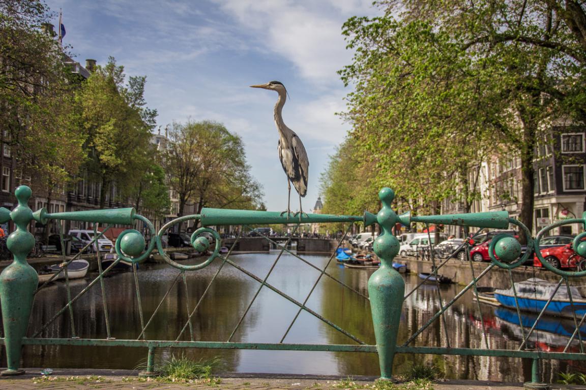 Les canaux d'Amsterdam ©B.Cappronnier