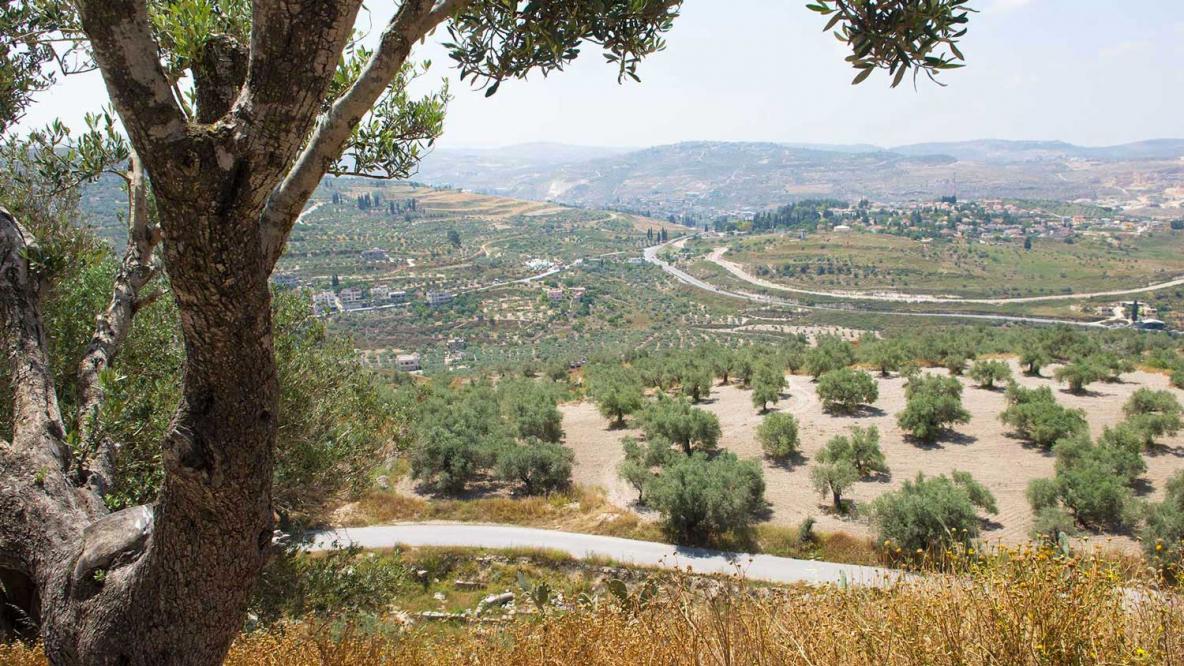 Vue depuis la colline du site archéologique de Sabastya © Florie Thielin