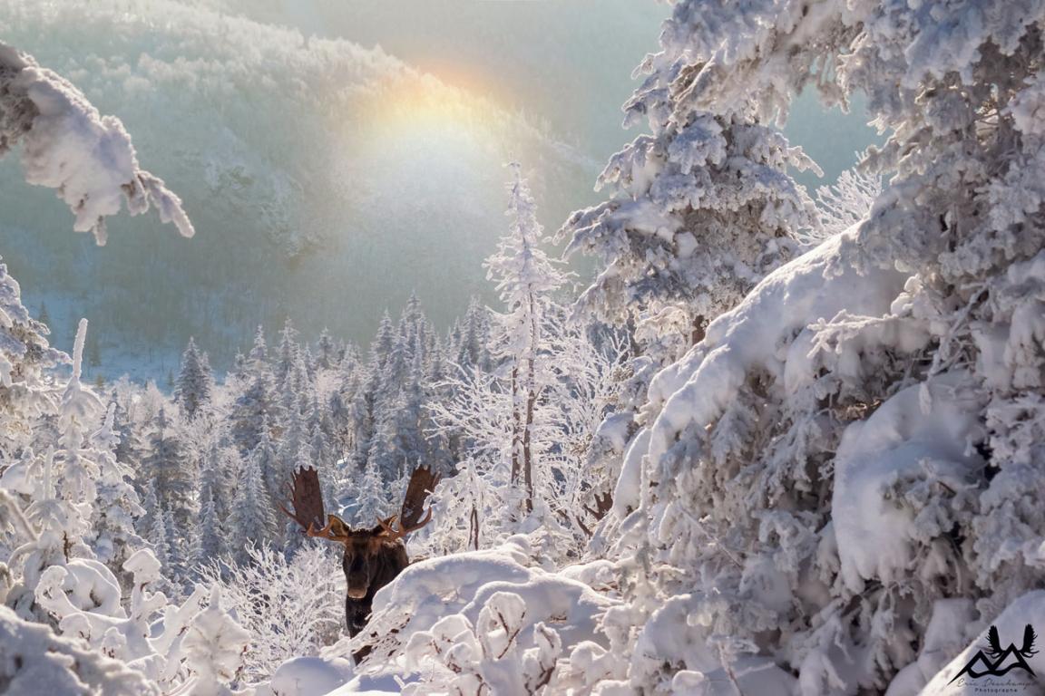 Parc National de la Gaspésie – Québec ©Eric Deschamps-Sépaq