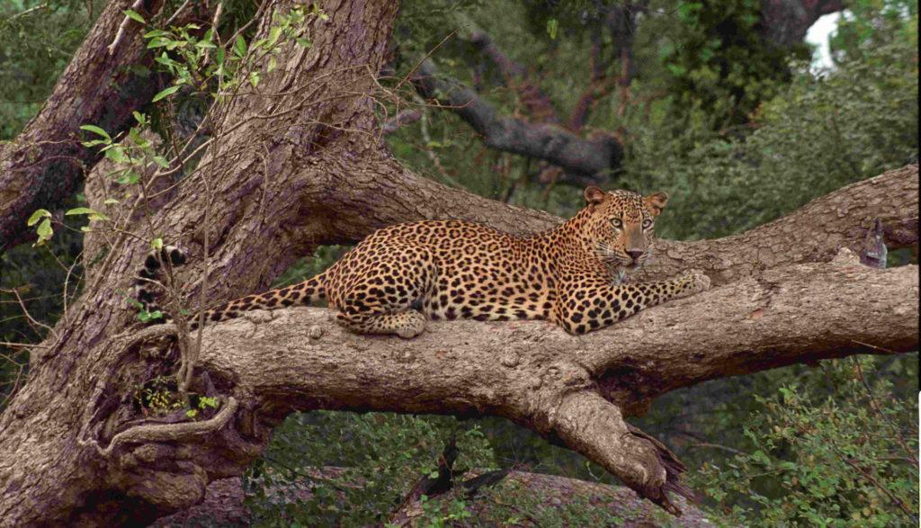 Le parc national de Wilpattu au Sri Lanka ©Visit Kalpitiya